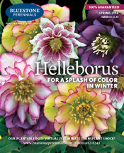 Bluestone Perennials 2013 Catalog