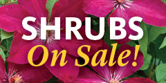 Bluestone Perennial Shrub Specials