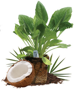 100% Biodegradable plant pots