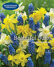 Bluestone Perennials 2016 Fall Catalog