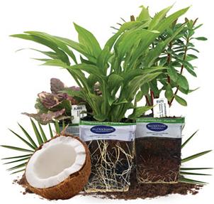 About Plantable Pots