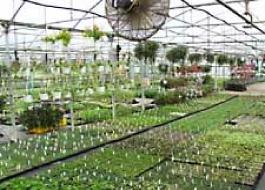 Hardening plants