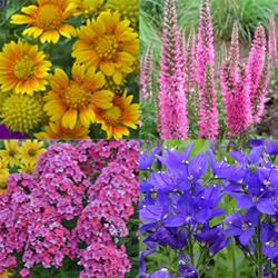 Expandable Perennial Garden