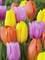 Beautiful Blends Pastel Parade