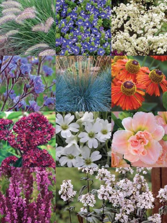 Bookend Garden