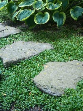 Mazus Reptans Bluestone Perennials