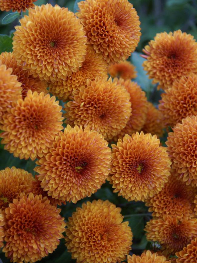 Mum Honeycomb