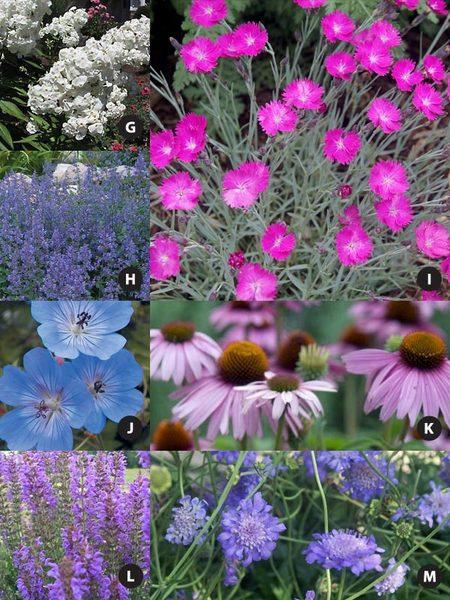 Pre Planned Flower Garden Designs: Pre-planned Bluestone-Plant-of-the-Year