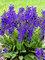 Salvia Evening Attire