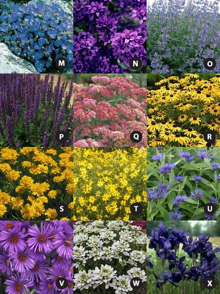 Perennial garden plan zone 4 some good plants and ideas for Forest garden design zone 4
