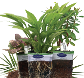 Bluestone Plantable Pot